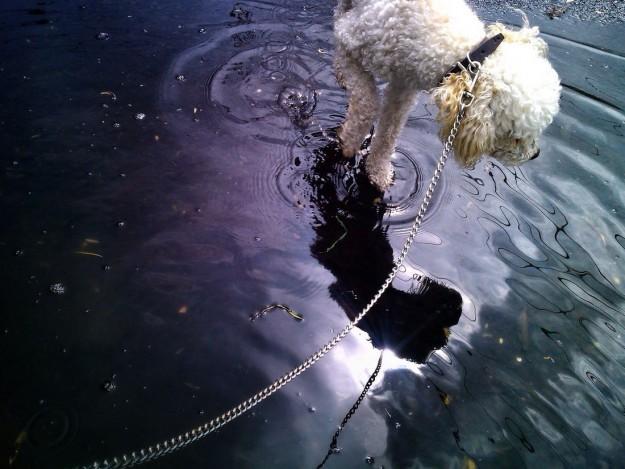 見てるだけで癒される。水面に映る美しいシーンの写真いろいろ
